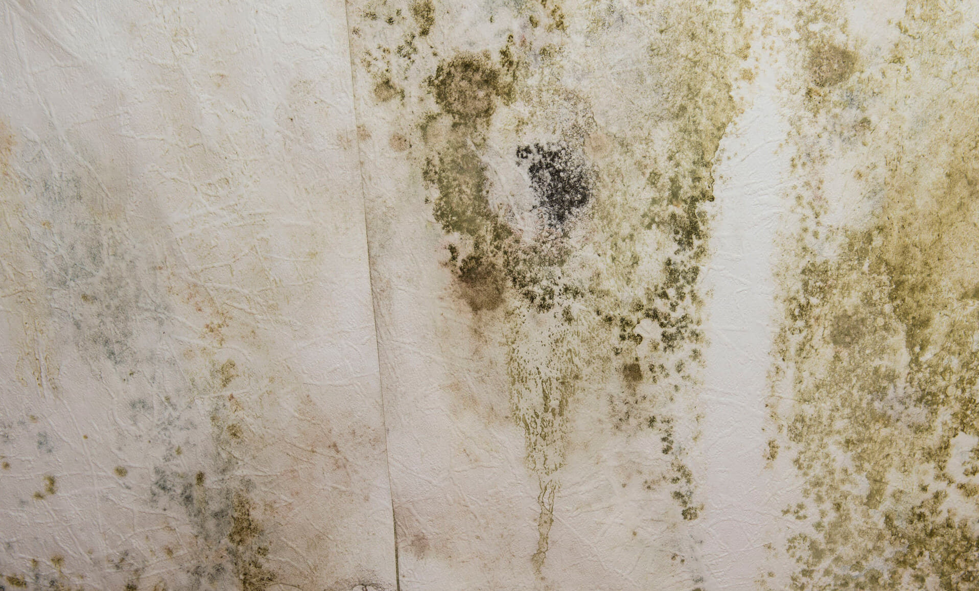 Kill Mold And Seal Area From Moisture
