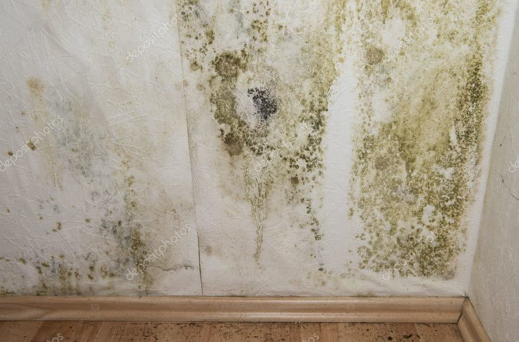 Should I Buy a House with a Moldy Basement?