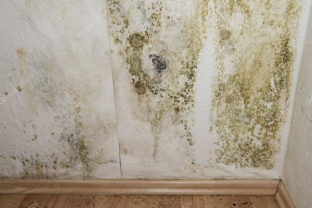 Should I A House With Moldy Basement, What To Do With Mold On Basement Walls
