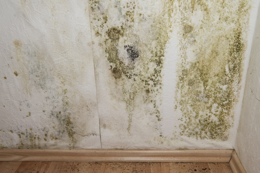 How Do You Know if There is Mold in Your House?