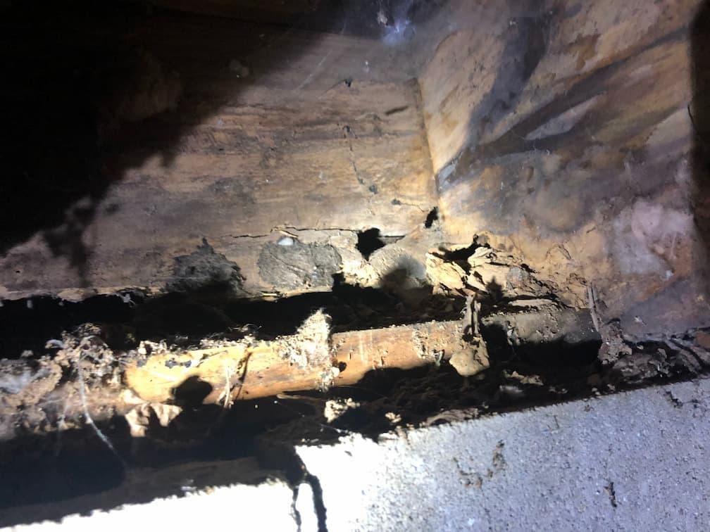 damp and rotting beam