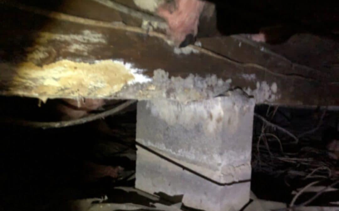 Wet Fiberglass Insulation, Mold, & Rotting Floor Joist