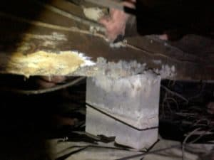 Wet Fiberglass Insulation, Mold, & Rotting Floor Joist