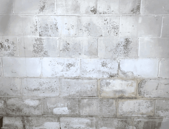 white basement wall with splotches of black mold