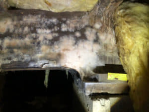 mold growth and wood decay on a support beam