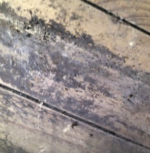 mold on wooden beams