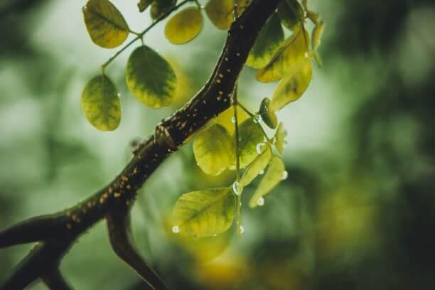 rain on tree branch
