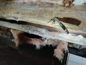 moldy rotten floor joist