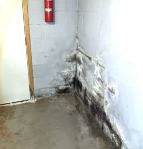 basement corner with mold and water